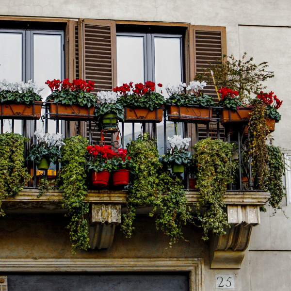 balcony with flowers in piazza navona in rome