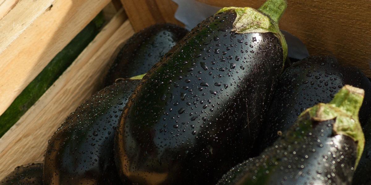 close up on eggplants
